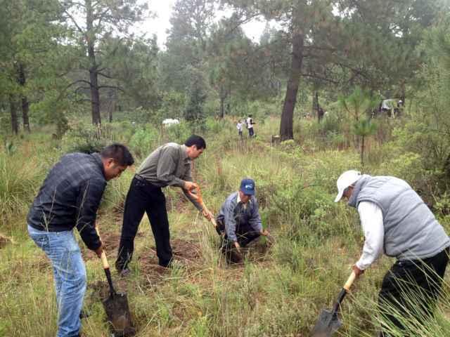 Participa Tetlanohcan en campaña de reforestación