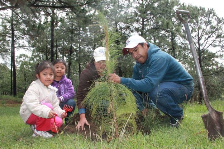 """Reforestan predio """"el bosque"""" en Tepetitla"""