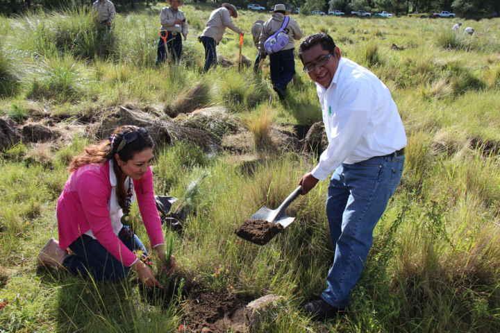 Sembrarán más de 12 mil árboles en Contla