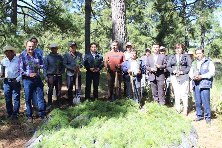 Realizan en Huamantla trabajos de  reforestación en el Parque Nacional La Malinche