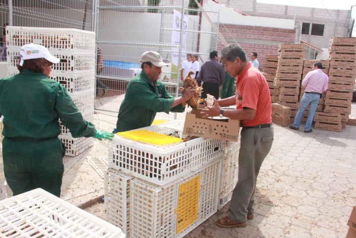En Xaloztoc benefician a 390 familias con paquetes de animales de traspatio