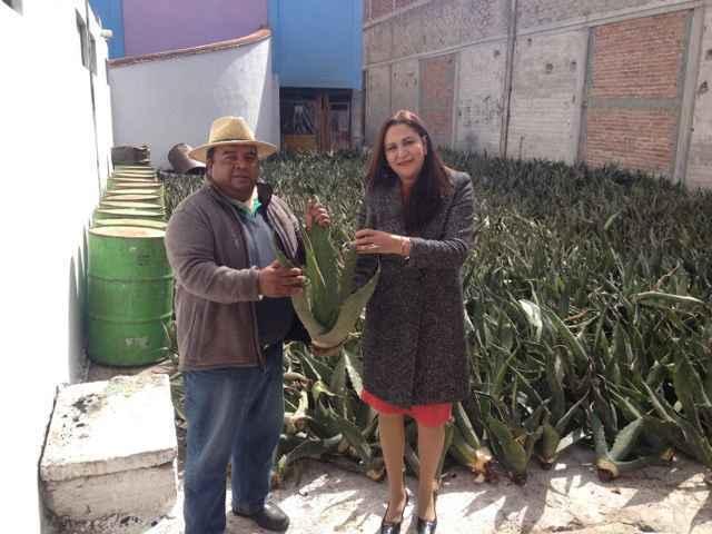 Lilia Olvera entrega apoyo de diez mil plantas de maguey