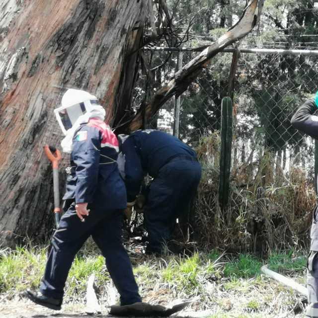 Derriban árboles secos que representan riesgo en temporada de lluvias