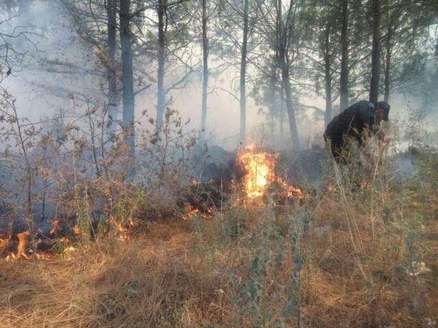 Extinguen brigadas de CGE y CES incendio en La Malinche