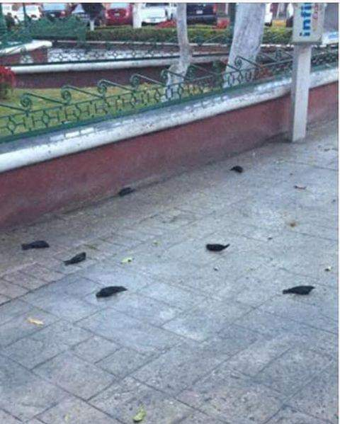 Ecocidio en parque de Huamantla; mueren cientos de pájaros