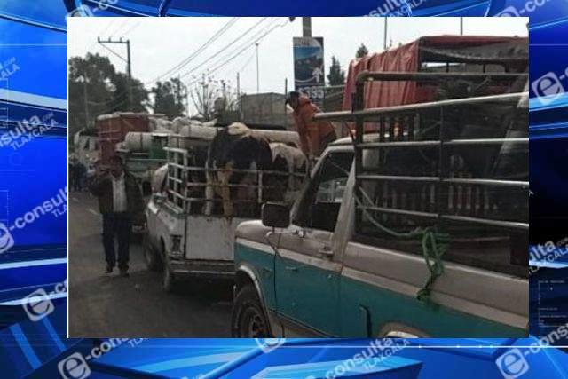 Comerciantes de ganado siguen desafiando la pandemia del covid 19