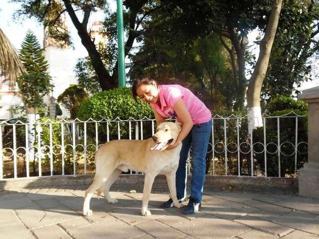 Convocan Apetatitlán y SESA a vacunación antirrábica canina y felina