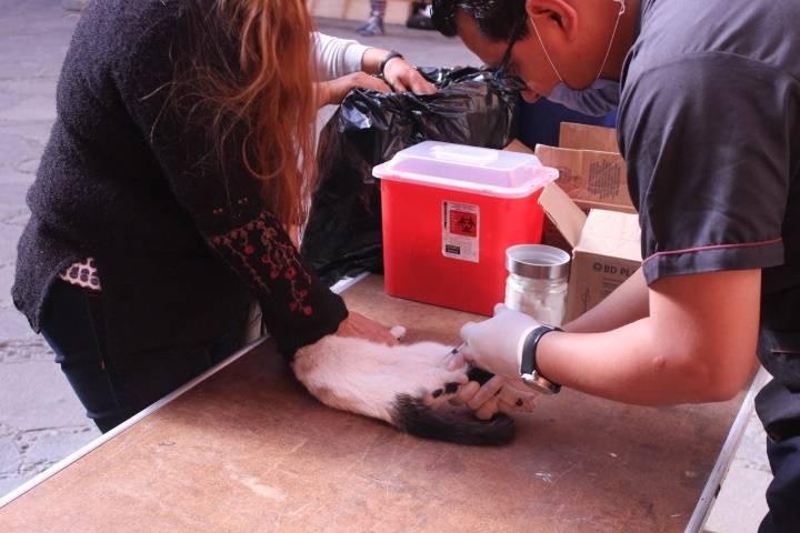Realizan en Huamantla campaña de esterilización de mascotas