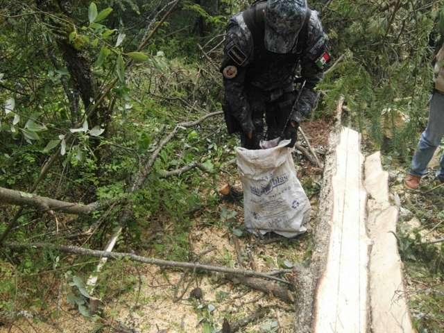 """Detienen a talador clandestino en el Parque Nacional """"La Malinche"""""""