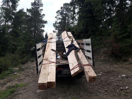 Resultados positivos logra operativo contra la tala clandestina