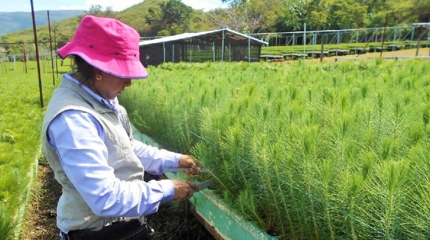 Presenta CONAFOR 90% de avance en la meta nacional de reforestación