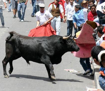 Aumentará el número de toros en la Huamantlada