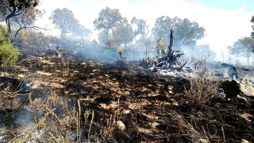 Sofocan incendio PC y Policía Municipal de Tlaxco en el Cerro de Xochuca