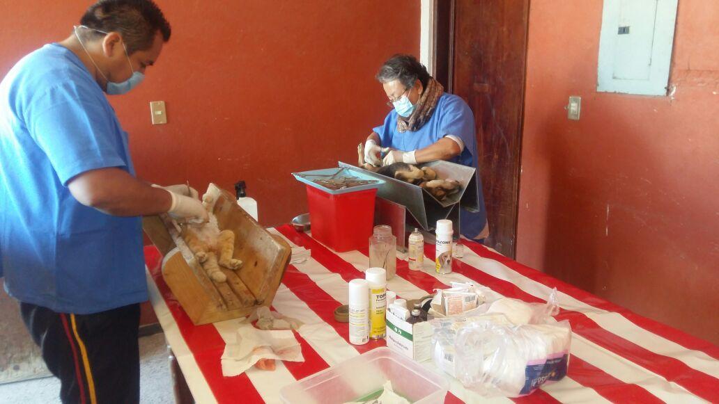Realizan en Lardizábal 220 esterilizaciones de perros y gatos durante campaña