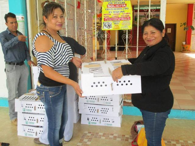 Entrega SMDIF de Quilehtla animales de traspatio a grupos vulnerables