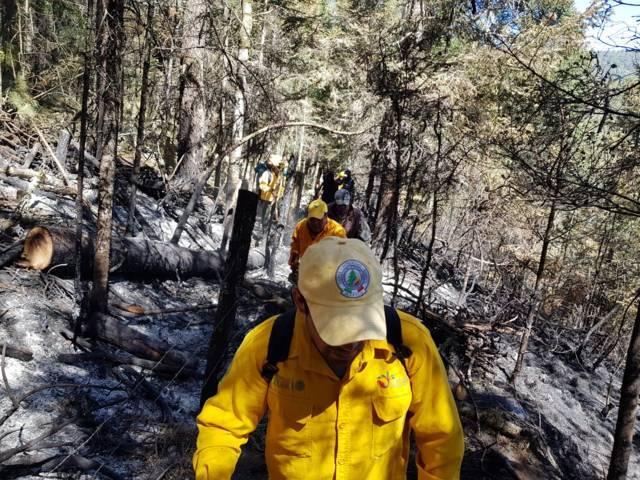 Incendio no afecto zonas de avistamiento de la luciérnaga: PC municipal