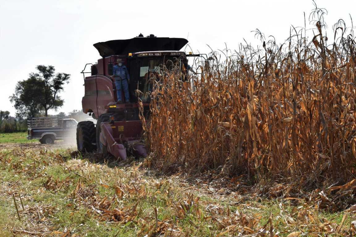 Maquinaria agrícola benefició a cientos de productores en Zacatelco