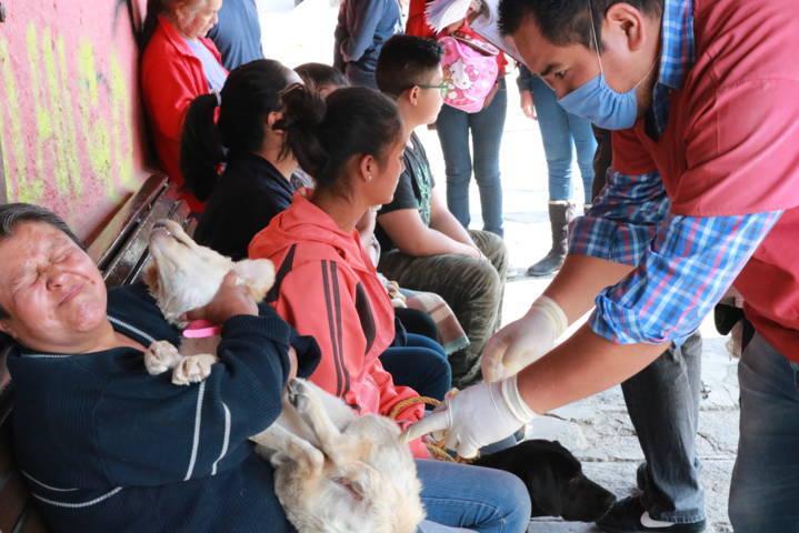 Realizan con éxito campaña de Esterilización de perros y gatos en Chiautempan