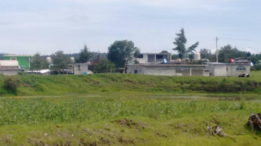 Hallazgo de plantío de amapola causa sorpresa en habitantes de Santa Cruz Tenancingo