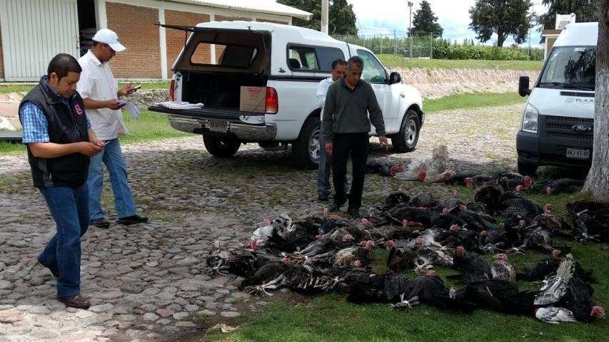 Entregan aves de traspatio en el municipio de San Pablo Del Monte