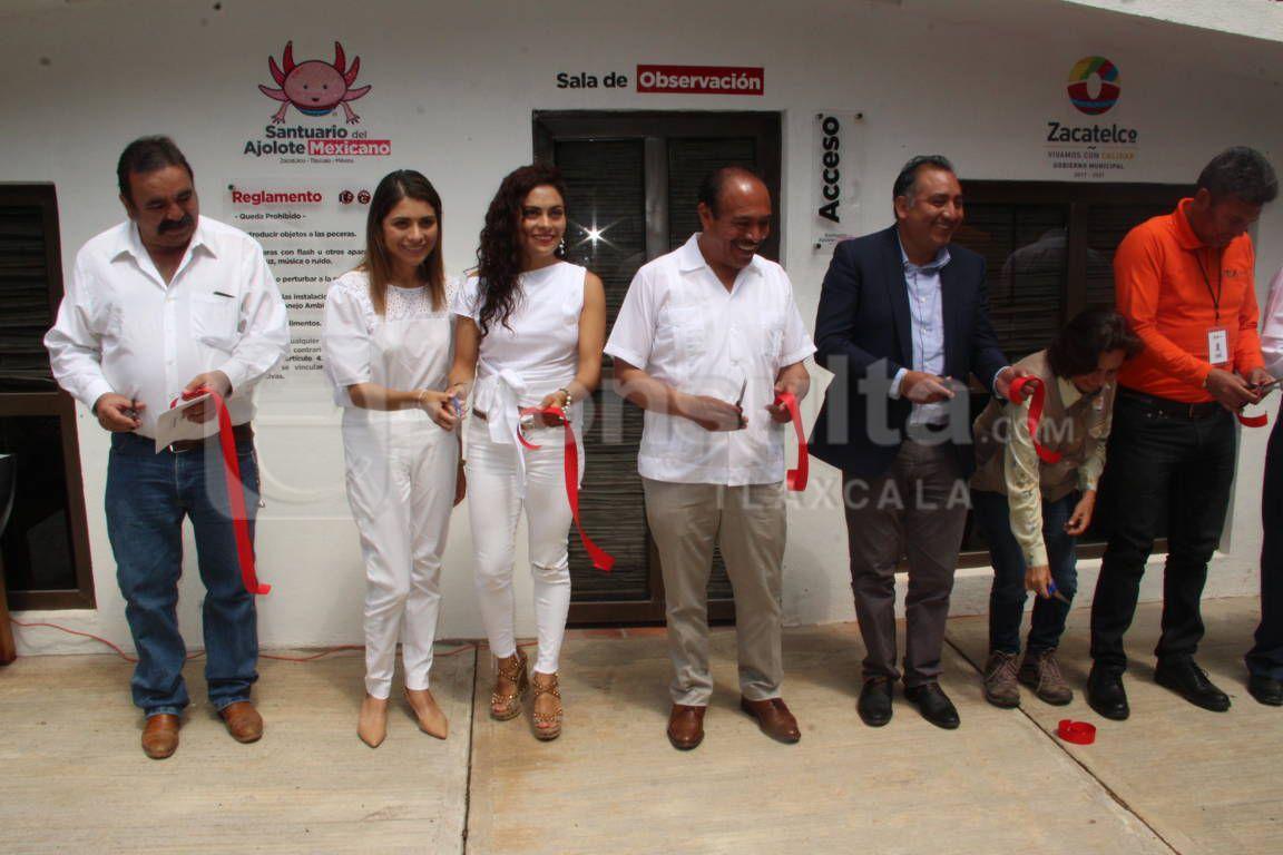 TOA abre las puertas del nuevo Santuario del Ajolote Mexicano en los ladrillos