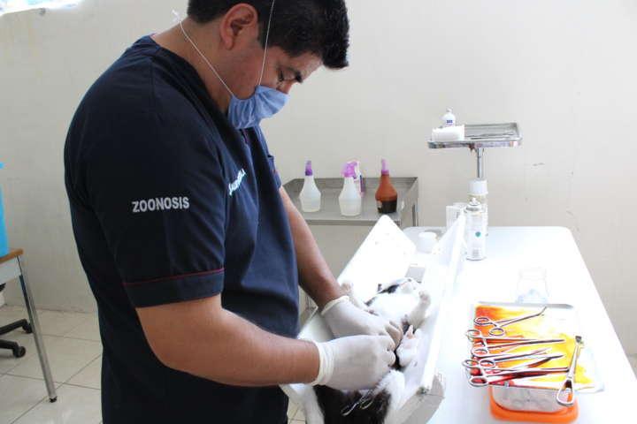 Conjuntan esfuerzos SESA y Ayuntamientos para vacunación de mascotas