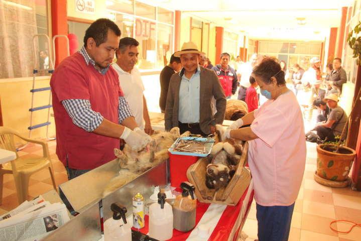 Ayuntamiento efectuó campaña masiva de esterilización de perros y gatos