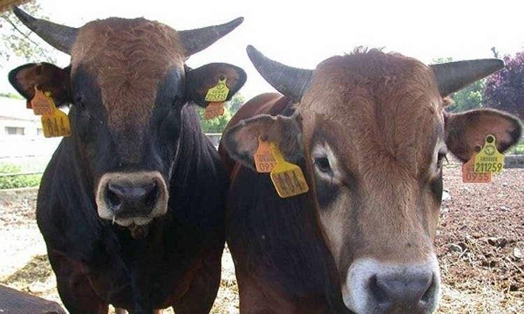 Exhortan a productores de Huamantla a registrar su ganado