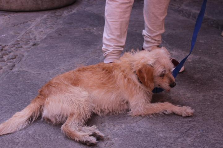 Intensifica Ayuntamiento de Huamantla campaña de esterilización de mascotas