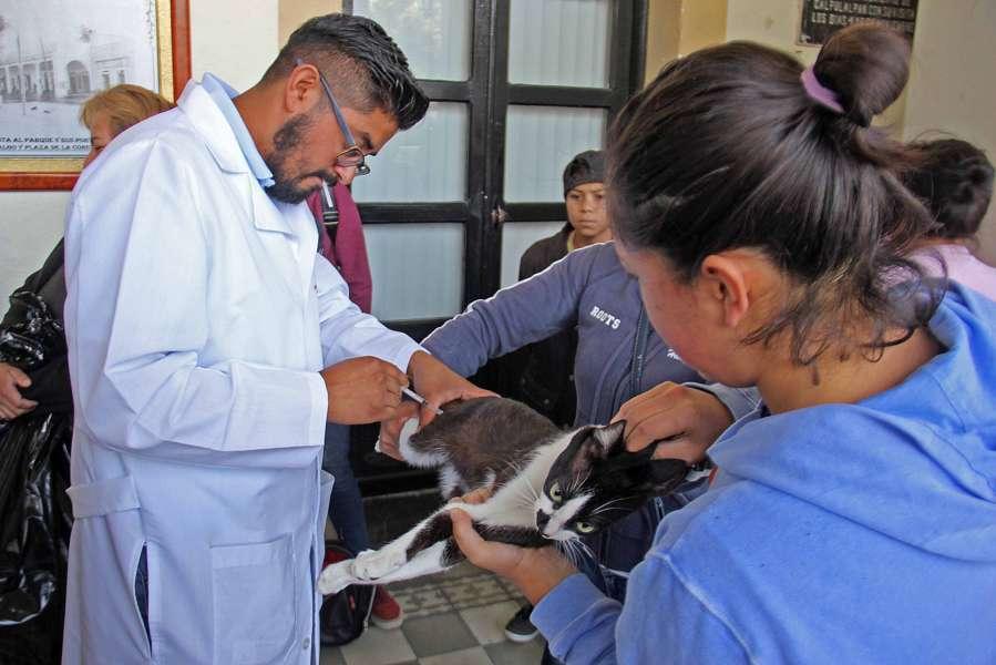 Realizan en Calpulalpan campaña masiva de esterilización canina y felina