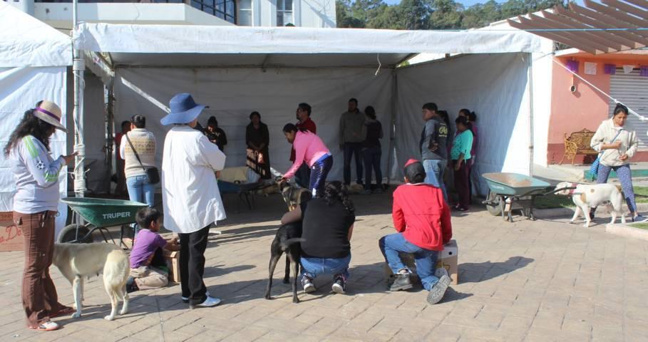 Con gran participación inicia campaña de esterilización canina y felina en Tepetitla