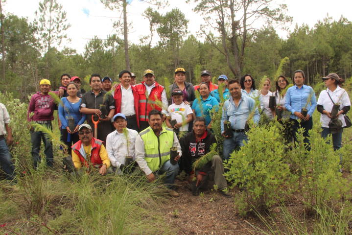 Ayuntamiento de Zitlaltepec reforesta zona afectada por los talamontes