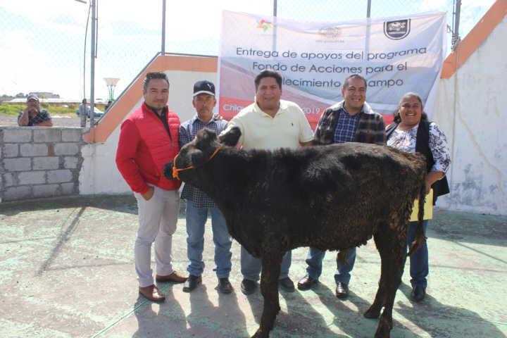 Alcalde apoya la economía campesinos entregando 26 bovinos