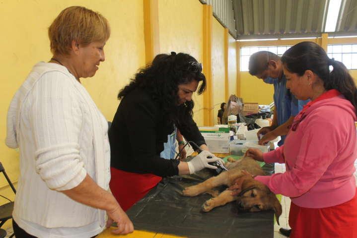 Ayuntamiento arranca campaña de esterilización para perros y gatos