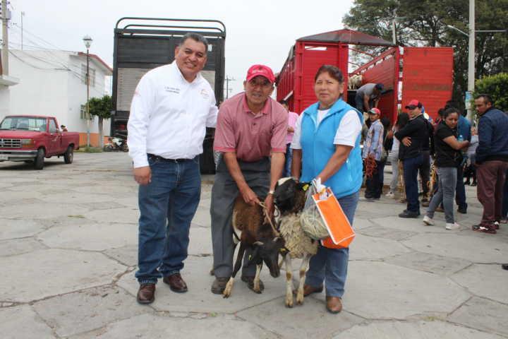 Alcalde impulsa la economía de 107 productores con ganado ovino y bovino