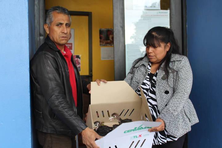 Ayuntamiento coadyuva con la economía familiar entregando animales de traspatio