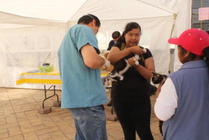 Concluye exitosamente campaña de esterilización canina y  felina en Lardizábal