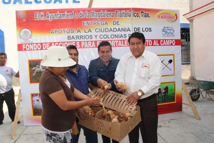 Con herramientas, lechones y pollos apoyamos a 249 familias de 4 barrios: alcalde