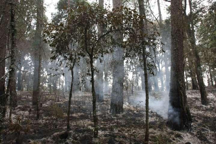 Previene Gobierno del Estado incendios forestales en el Parque Nacional Malinche
