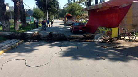 Caída de árbol de 5 metros deja un lesionado en Ixtacuixtla