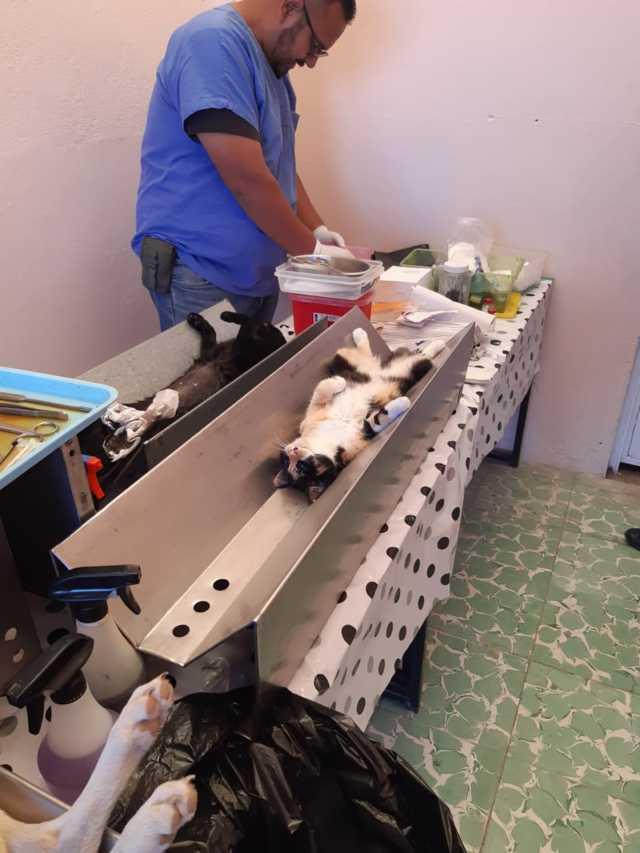 En la 4ta jornada de esterilización se realizaron 850 cirugías de perros y gatos.