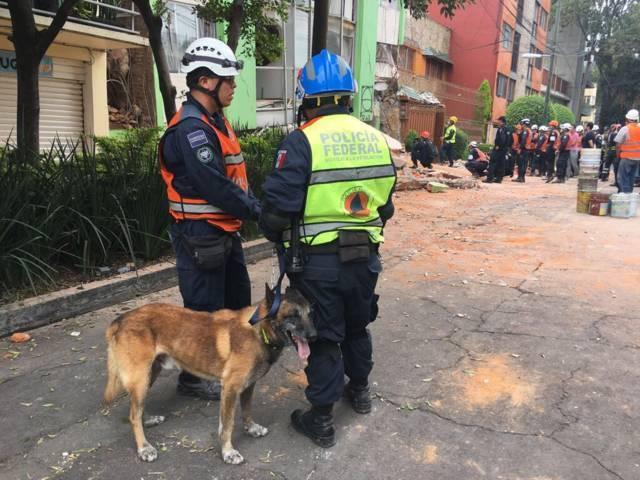 Kublay el oficial canino que ha recuperado más de 70 cuerpos