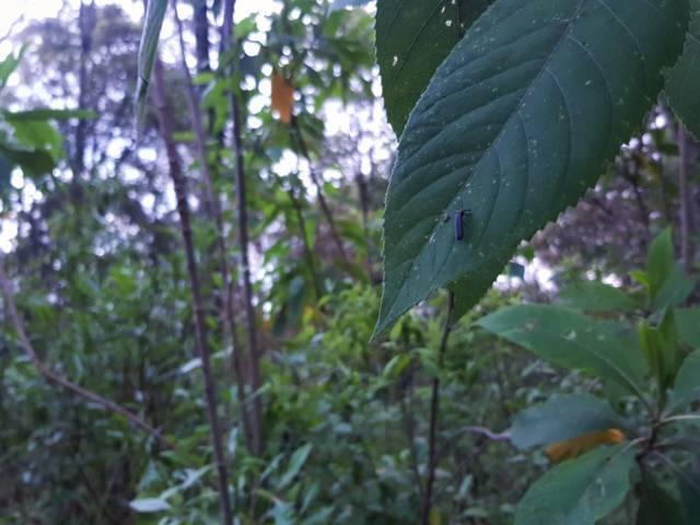 Conserva Conafor el bosque de Nanacamilpa con recursos del PSA