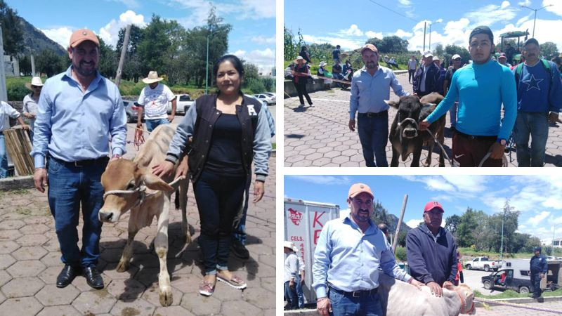 Alcalde de San José Teacalco entrega 61 novillos de engorda