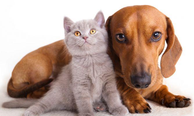 Preparan campaña de esterilización de perros