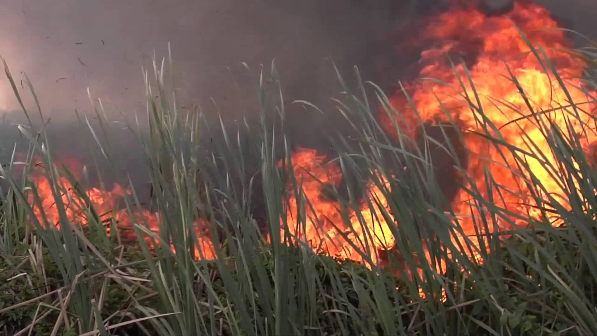 Combaten PC y Seguridad Pública conatos de incendio en Texóloc