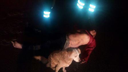 Lo atropellan, muere y su perro resguarda su cadáver