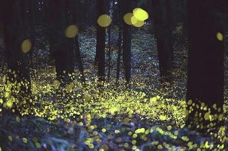 Brillan miles de luciérnagas en Nanacamilpa