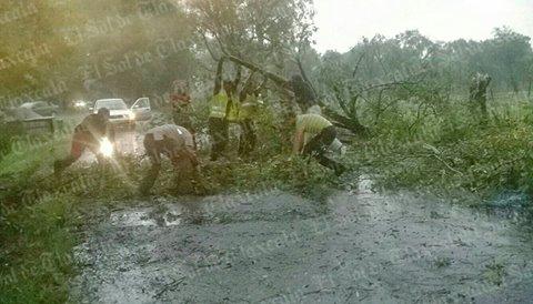 Fuertes lluvias y vientos provocan caída de ramas en Ixtacuixtla