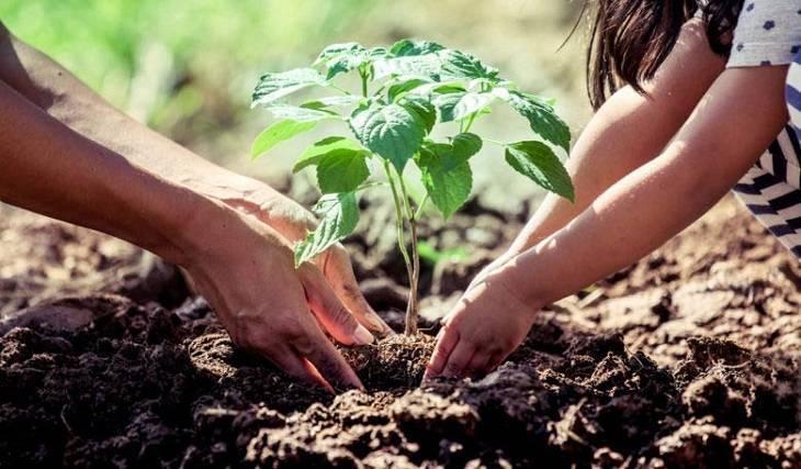 Iniciativa privada, autoridades y comunidad se unen por el medio ambiente de Apizaco